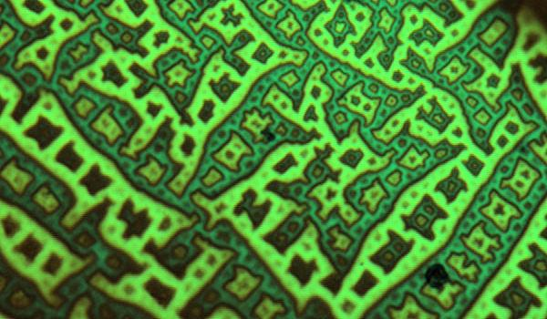 close-up of a green pattern on a material
